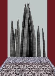 Claudia Jaguaribe, Cactoceae1