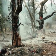 Simen Johan, Untitled #121, Burnt Forest