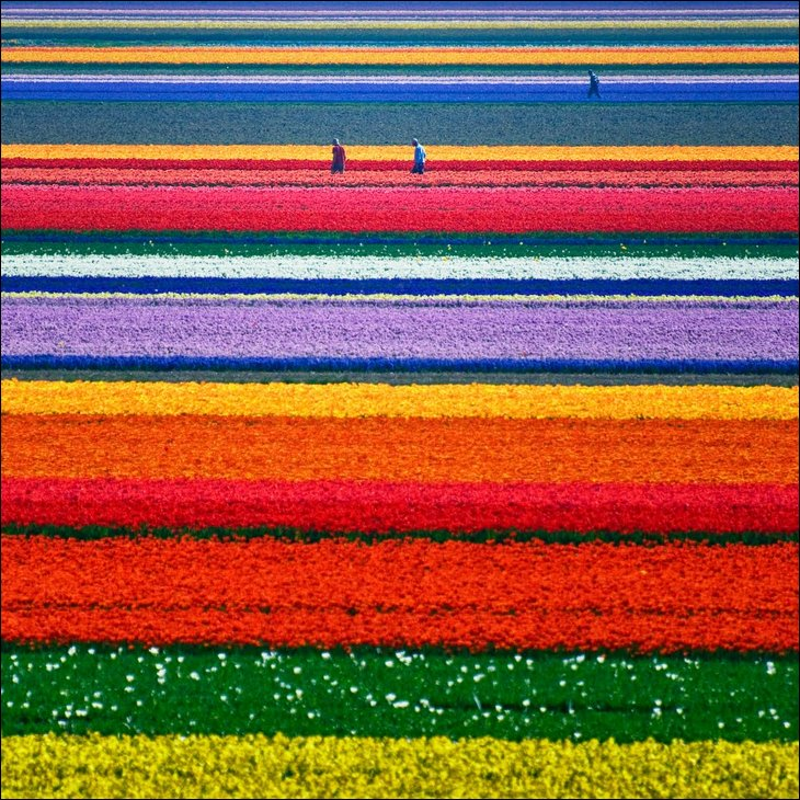 The tulip fields in the spring.