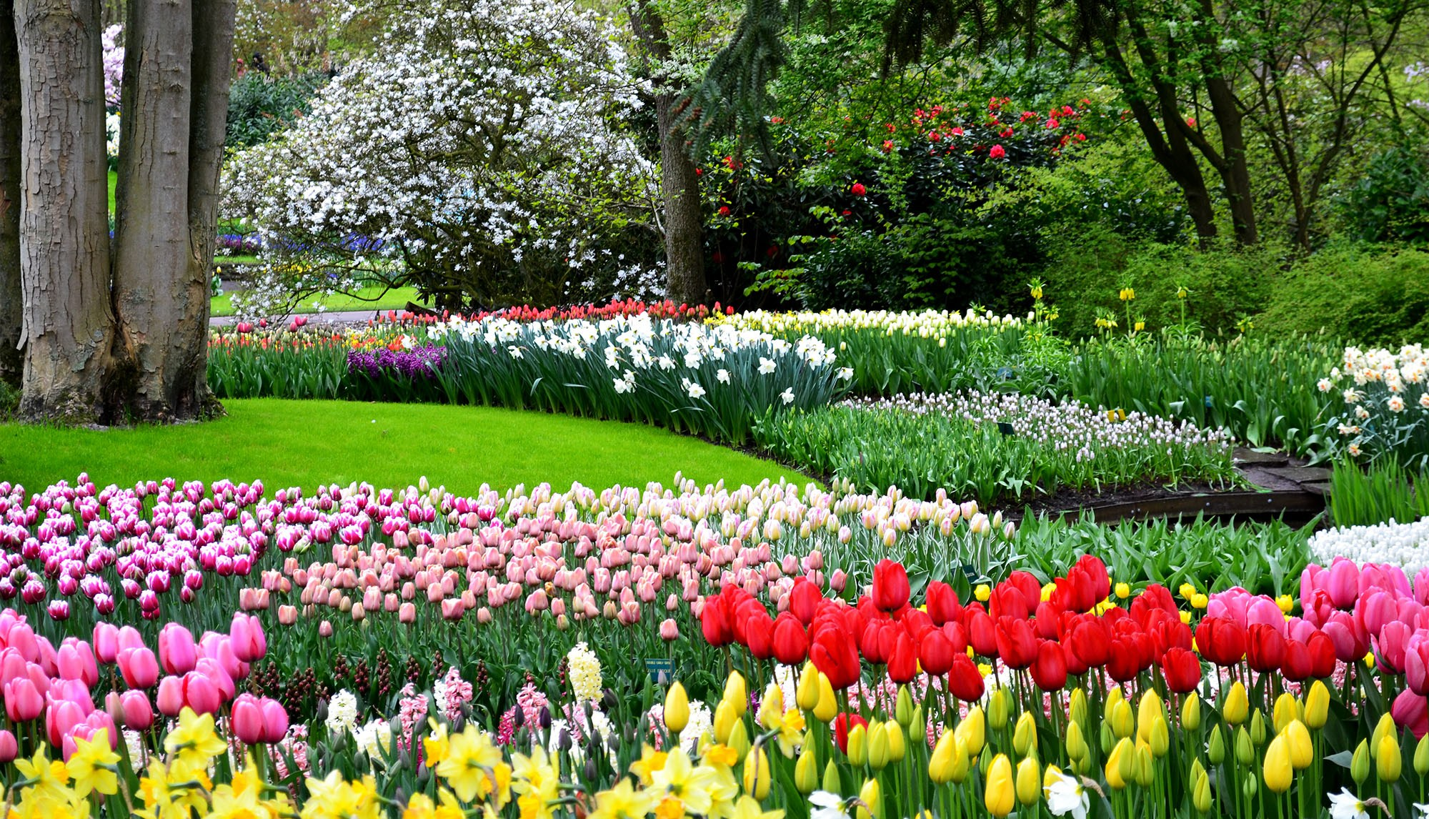 Keukenhof garden in Bloom